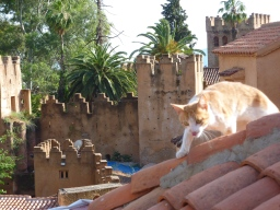 Rooftop view of Cheafchaouen, complete with cat