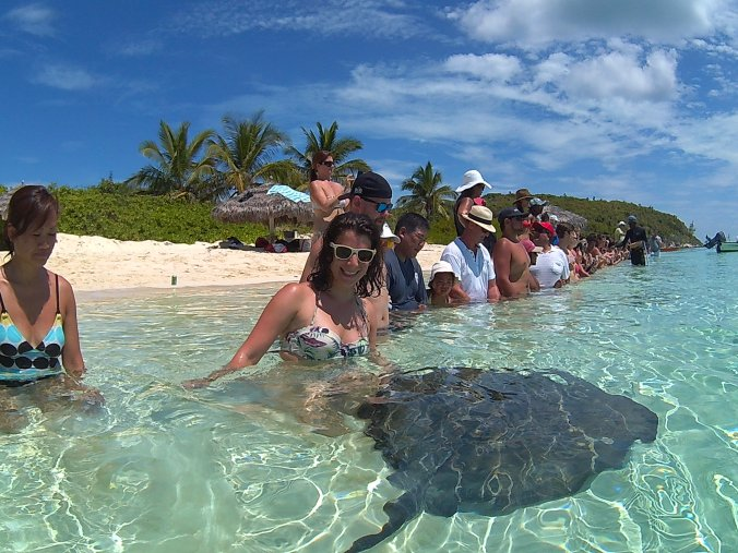 Stingray feeding joy