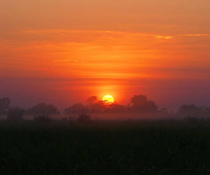 Sunrise, Pampas, Rurrenabaque, Bolivian Amazon